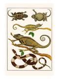 Lizards  Snakes  Chameleons