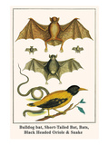 Bulldog Bat  Short-Tailed Bat  Bats  Black Headed Oriole and Snake