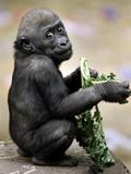 APTOPIX Zoo President Kiki