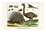 Malayan Porcupines and Ostrich