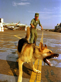 Vietnam War USAF Guard Dog