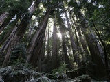 Travel Trip Muir Woods 100th