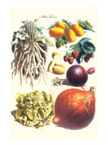 Vegetables; Lettuce  Persimmon  Turnip  Potato  Pumpkin  Strawberries  and Legumes