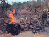 Viet Cong Burning