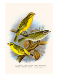 St Helena Seed Eater and Green Singing Finch