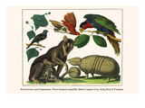 Brown Four-Eyed Oppossum  Three Banded Armadillo  Black Capped Lory  King Bird of Paradise
