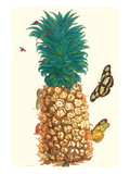 Butterfly and Beetle on a Pineapple