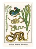 Snakes  Birds and Sunflower