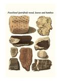 Fossilised (Petrified) Wood  Leaves and Bamboo