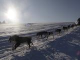 Czech Republic Dog Sleds
