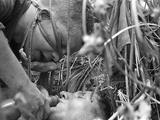 Vietnam War Operation Hastings