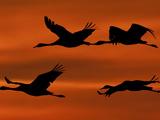 APTOPIX Germany Bird Migration
