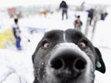 APTOPIX Romania Dog Shelter Snow