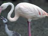 DEU BY Zoo