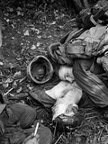 Vietnam War US Dead