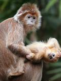 APTOPIX Bronx Zoo