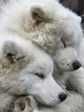 Ukraine Dogs