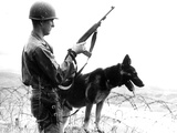 Dogs in Vietnam