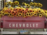 Chevrolet Papier Photo par Amy Sancetta