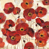 Bold Poppies