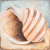 Seashell Collection I