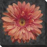 Vivid Floral 2: Gerbera Daisy