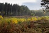 Autumn Surrey