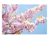 Blossom 3