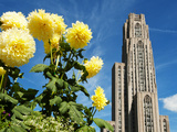 University of Pittsburgh - Flowers and Cathedral of Learning