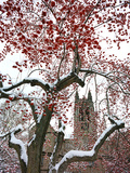 Boston College - Winterberries in the Quad