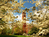 Vanderbilt University - Dogwoods Surround Kirkland