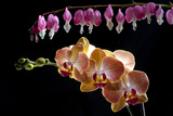Flower mix bleeding heart and orchid hang together