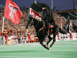 Texas Tech University - The Masked Rider Takes the Field for Texas Tech
