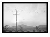 Birds on Wire Reproduction d'art par Ansel Adams