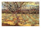 Apricot Trees in Blossom Reproduction d'art par Vincent Van Gogh