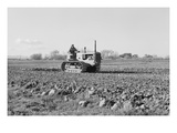 Cultivating Potato Field