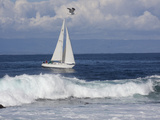 Sailboat on Monterey Bay  California