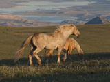 Wildhorse Palomino Stallion Late Day  Wyoming