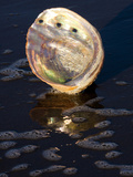 Abalone Shell on California Beach at Dawn