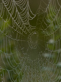 Spider Web in Dew