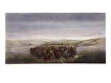 Buffalo Herd  1862