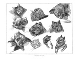 Gericault: Cats