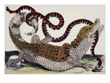 Crocodile and Snake