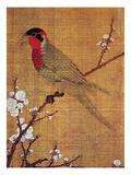 China: Parakeet