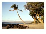 Hawaii: Oahu  2005