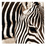 Zebra Pattern
