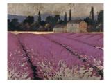 Lavender Days