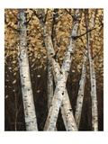 Shimmering Birches 1