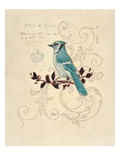 Filigree Jay