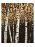 Shimmering Birches 2